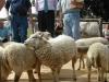 jury-concours-national-mouton-ouessant-le-dresny-2004