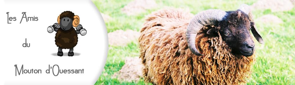 Les amis du mouton d'ouessant