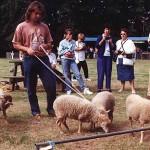Moutons blancs présentés au concours national du GEMO à Meneuz-Meur en 1994