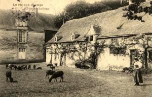 Cette ancienne carte postale datant du début du XX° siècle représente la cour d'une ferme bretonne ou nantaise.